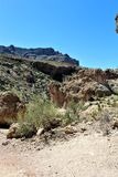 Boyce Thompson Arboretum State Park, superiore, Arizona Stati Uniti fotografie stock libere da diritti