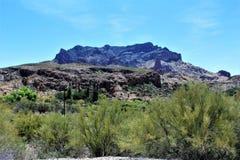 Boyce Thompson Arboretum State Park, superiore, Arizona Stati Uniti Immagine Stock Libera da Diritti