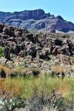 Boyce Thompson Arboretum State Park, Vorgesetzter, Arizona Vereinigte Staaten Stockbilder