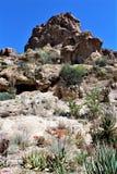 Boyce Thompson Arboretum State Park, Vorgesetzter, Arizona Vereinigte Staaten Lizenzfreie Stockfotos