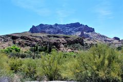 Boyce Thompson Arboretum State Park, Vorgesetzter, Arizona Vereinigte Staaten Lizenzfreie Stockbilder