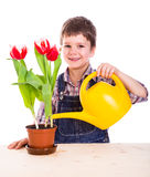 Boyl care flowers in pot Stock Image