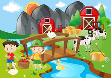 Boys and animals in the farmyard Royalty Free Stock Image