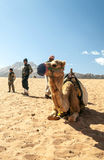 Boys with a camel Stock Photography