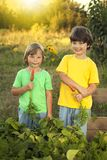 Boys with a carrot and in the garden, children harvest vegetable. S with high beds Royalty Free Stock Photography