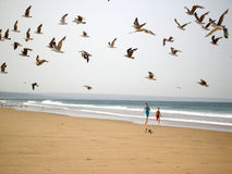 Boys chasing birds Stock Images