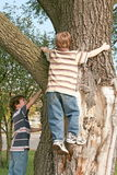 Boys Climbing a Big Tree Stock Photo