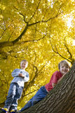 Boys climbing tree with autumn leaves Royalty Free Stock Photography