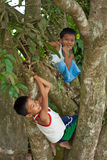 Boys Climbing Trees Stock Images