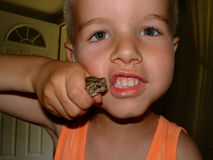 Boys and creepy crawlies. Do all boys love reptiles and such? My experience says almost all do stock photography