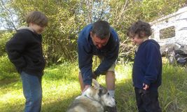 Boys and dad petting dog royalty free stock image
