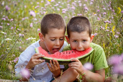 Boys eating watermelon Stock Images