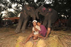 Boys and elephants Royalty Free Stock Image