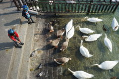 Boys feeding birds Stock Images