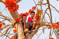 Boys on the flame tree. Royalty Free Stock Photo