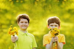 Boys gives a bouquet yellow dandelions stock photography