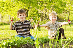 Boys hold up radishes in garden Royalty Free Stock Photos
