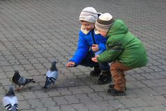 The boys with mother on the square feed pigeons royalty free stock image