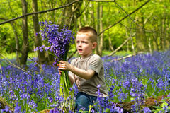 Boys playing in the bluebell woods Royalty Free Stock Image