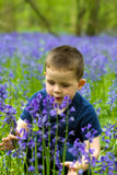 Boys playing in the bluebell woods Royalty Free Stock Photo