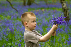 Boys playing in the bluebell woods. Boys playing in magical bluebell woods UK Royalty Free Stock Images