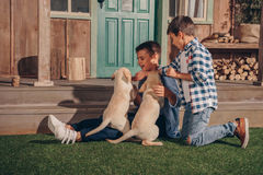 Boys playing with cute labrador puppies together. Little boys playing with cute labrador puppies together stock photo