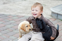 Boys playing with two dogs labrador black and white Royalty Free Stock Photos
