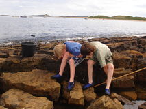 Boys rock pooling. Two boys looking for fish and crabs in the rock pools stock image
