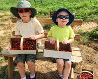 Boys sitting with baskets of strawberries. Boys sitting on a bench with full baskets of strawberries Royalty Free Stock Image