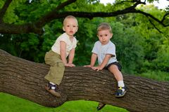 Boys sitting on the oak's branch Stock Images