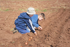 Boys sowing onion. Two cute boys playing and sowing onion royalty free stock image