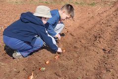 Boys sowing onion. Two cute boys playing and sowing onion Stock Photography