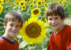 Boys in Sunflower Field Royalty Free Stock Images