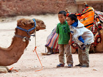 Boys tease camels in Petra, Jordan Royalty Free Stock Image
