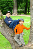 Boys in a Tree Stock Images