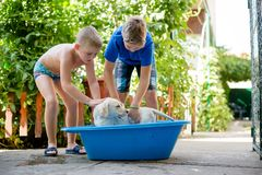 Boys are washing their dog. Two boys washing their dog, wearing summerwear and having fun royalty free stock photos