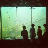 Boys watching fish in underwater aquarium. Freshwater underground aquarium lake in austrian city Orth an der Donau, boys investigating fish and life underwater stock photography
