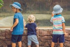 Boys watching reptiles in the terrarium royalty free stock photos