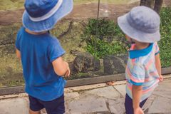 Boys watching reptiles in the terrarium. Boys watching reptiles in terrarium through glass Royalty Free Stock Images