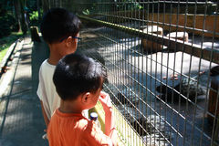 Boys at the Zoo. Two boys looking at porcupines from outside the cage of a zoo Royalty Free Stock Image