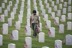 Boyscout umieszcza jeden 85, 000 USA flaga przy 2014 dni pamięci wydarzeniem, Los Angeles Krajowy cmentarz, Kalifornia, usa obraz stock