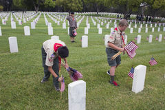 Boyscouts placing 85, 000 US Flags at Annual Memorial Day Event, Los Angeles National Cemetery, California, USA Stock Image