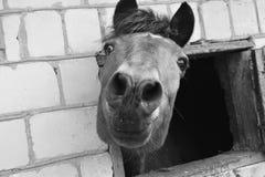 Bozal de un caballo imagen de archivo