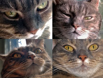 Bozal de un gato gris Fotografía de archivo