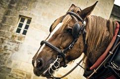 Bozal del caballo Fotografía de archivo libre de regalías
