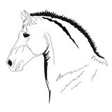 Bozal del caballo Fotos de archivo