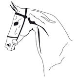 Bozal del caballo Fotos de archivo libres de regalías