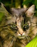 Boze Kat stock afbeeldingen