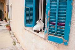 Boze kattenclose-up royalty-vrije stock afbeeldingen