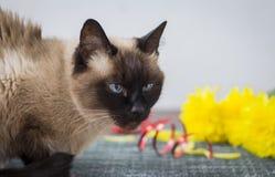 Boze kattenzitting op de lijst aangaande de achtergrond van een boeket van bloemen royalty-vrije stock foto